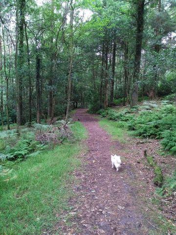 Glengarra Forest 2